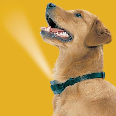 The Bark Deterring Spray Collar.