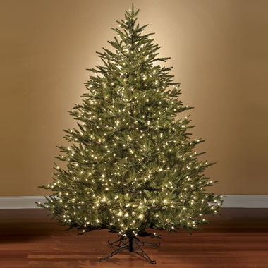 The World's Best Prelit Fraser Fir (7 1/2 Foot LED).
