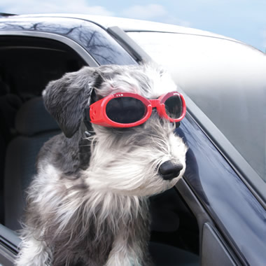 The Canine Protective Goggles.