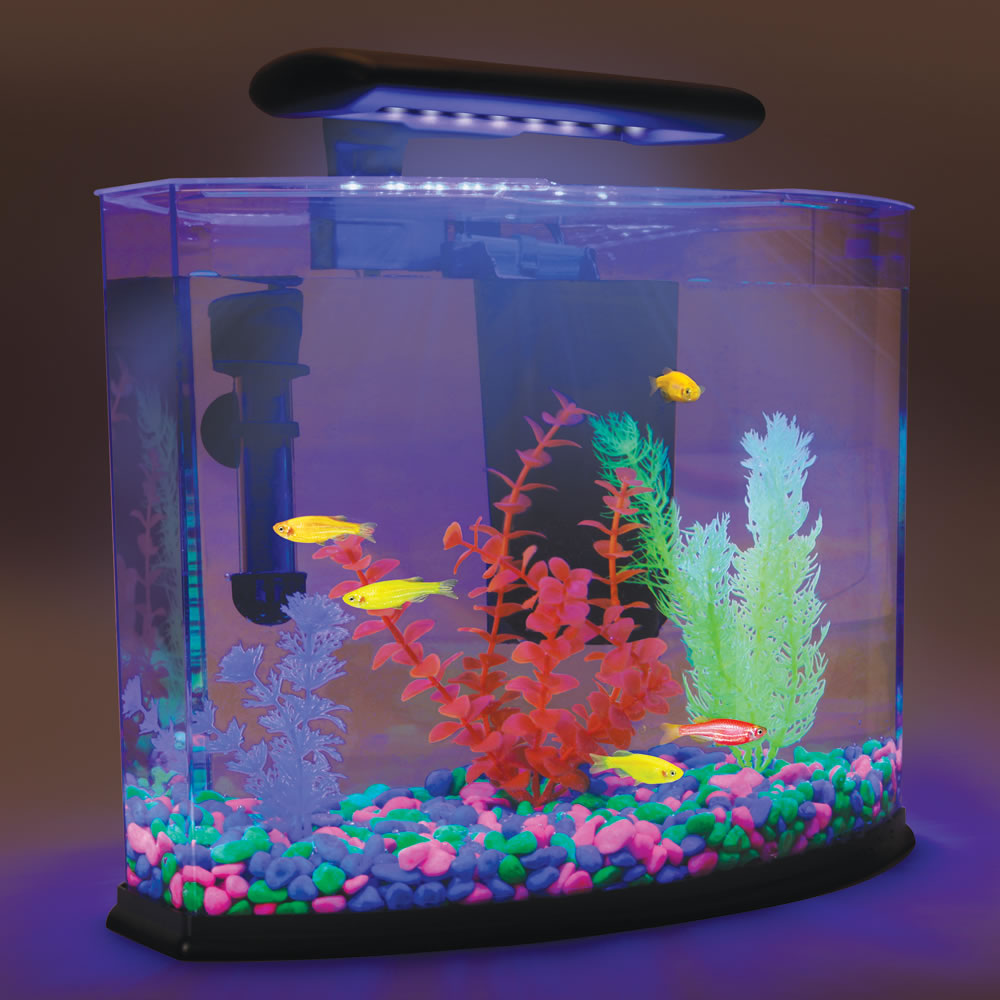 The Glofish Shangri La Hammacher Schlemmer