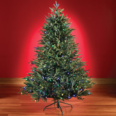 The 6 Foot Battery Operated Prelit Fraser Fir