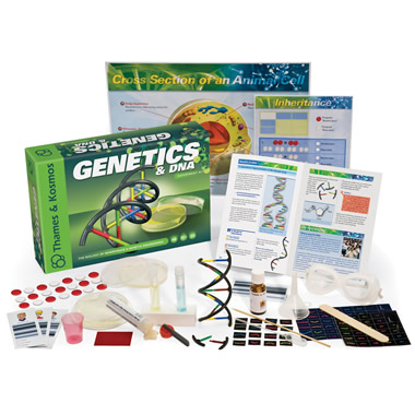 The Genetics And DNA Experiment Kit