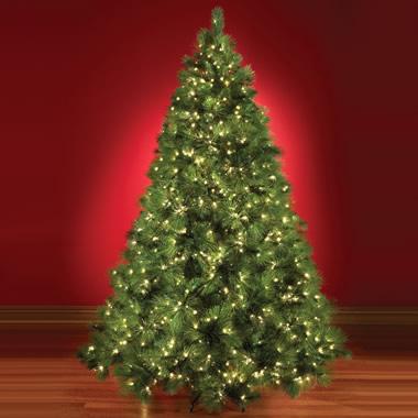 The World's Best Prelit Scots Pine  (7.5' Full).