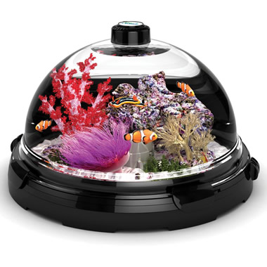 The Tabletop Saltwater Aquarium