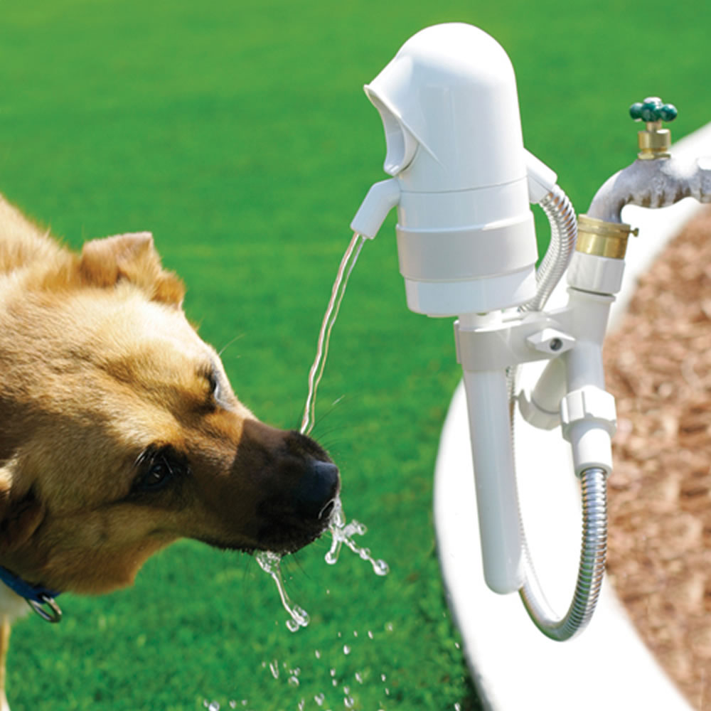 The Dog Activated Outdoor Fountain Hammacher Schlemmer