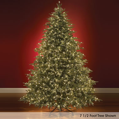 The World's Best Prelit Fraser Fir  (8.5' Slim LED).