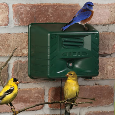 The Ornithologist's Song Bird Attractor