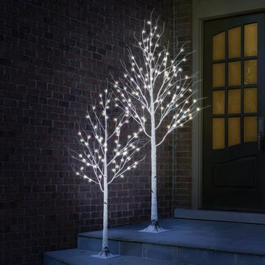 The 8' Winter Wonderland Birch.