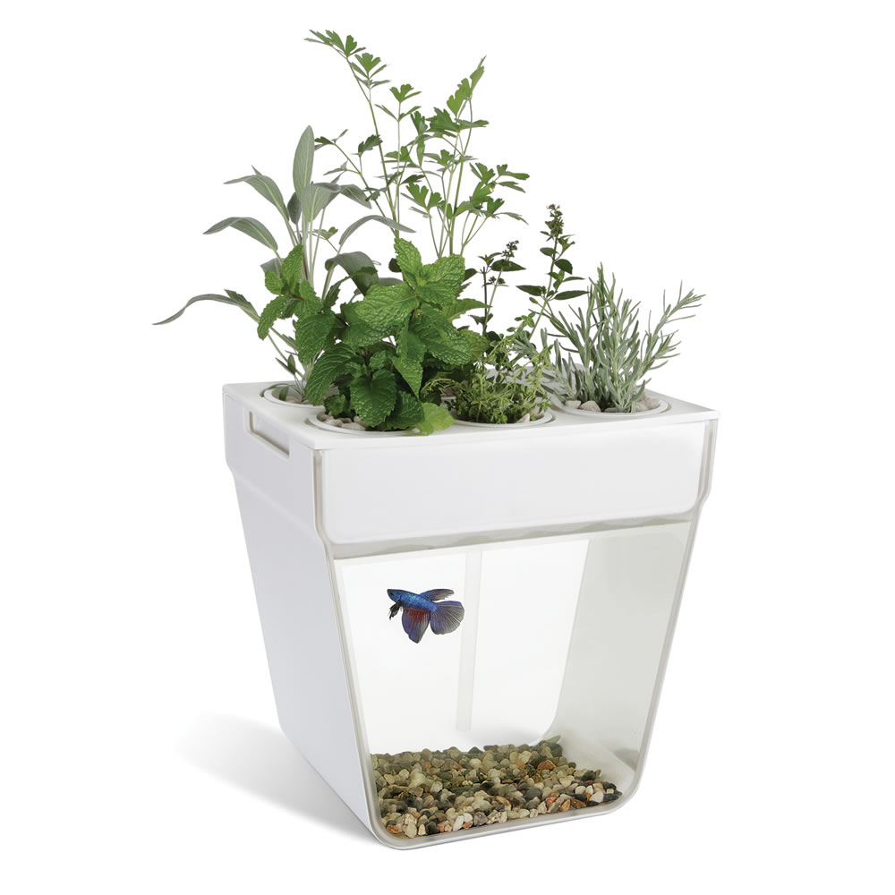 The aquaponic fish tank hammacher schlemmer for Fish and plants in aquaponics