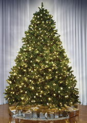 The World's Best Prelit Douglas Fir (9.5' Slim LED)