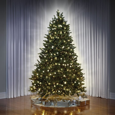 The World's Best Dual Light Balsam Fir (7.5' Full)