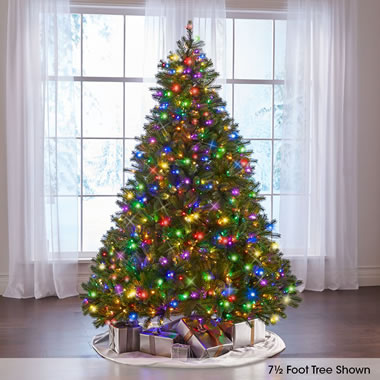 Best Douglas Fir (7.5' Slim Led) Whi