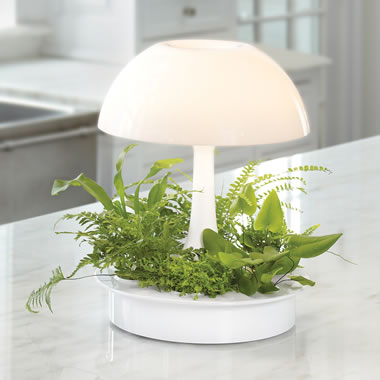 The Hydroponic Garden Lamp