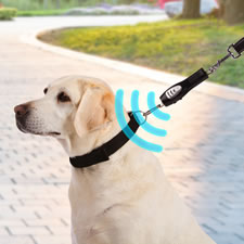 The Excitable Dog's Ultrasonic Walking Trainer