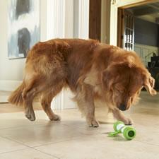 The Interactive Dog Bone