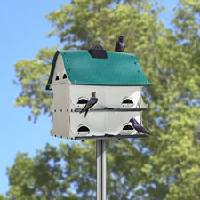 The Purple Martin Migration House