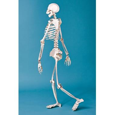 The Aspiring Orthopedist's Paper Doll