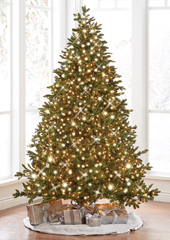 The World's Best Prelit Noble Fir (6.5' Slim)