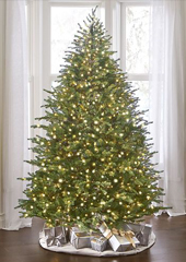 The World's Best Prelit Concolor Fir (6.5' Slim LED)