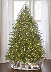 The World's Best Prelit Concolor Fir (4.5' Full LED)