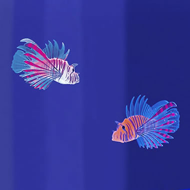 The Two Pack Of Lionfish