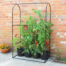 The Instant Tomato Mini Greenhouse