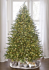 The World's Best Prelit Concolor Fir