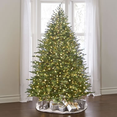 The World's Best Prelit Concolor Fir (4.5' Full)