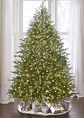 The World's Best Prelit Concolor Fir (7.5' Slim LED)