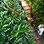 The Best Long Reach Hedge Trimmer bushes