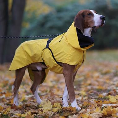 The Dog's Reflective Raincoat