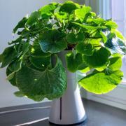 http://www.hammacher.com - The Indoor Self Watering Planter 89.95 USD